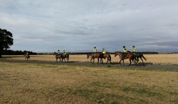 SeamusMullinsRacingClub – Morning on the gallops